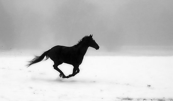 Horse Running, Google Images